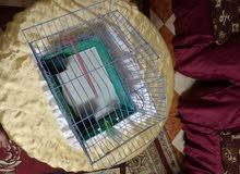 قفص عصافير استرالي بدون الببت للببع