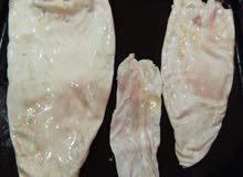الجهاز التنفسي لسمك (قشر بياض)