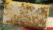 عسل طبيعي  خلطات  علاجية
