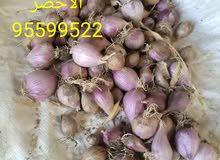 ثوم عماني للبيع انتاج الجبل الاخضر