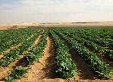 امتلك ارض مستصلحة وممهدة للزراعة