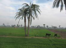 40 فدان مسجلة ارض تصلح للاستصلاح الزراعي والانتاج الداجني والحيواني طريق مصر الفيوم