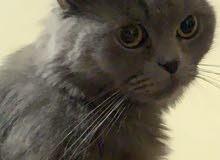 قطة ضائعة. في هورة سند