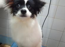 كلبة جرفون