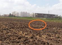 ارض خلف جامعة دمنهور وتبعد عن الاستاد الجديد 120 متر