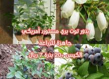 بذور جاهزة للزراعة سريعة النمو وسهلة فواكه وخضروات
