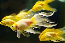 أسماك منوعة للبيع أنواع جديدة