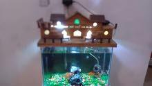 حوض سمك متكامل فيه 4 طروف اسماك كبار الحجم