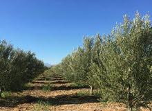 مزرعة رائعة للبيع بضواحي مراكش