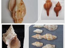 Corals and Shells