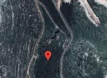 عقار للبيع في الجنوب قضاء النبطية / بلدة عزة مساحة 11350 متر