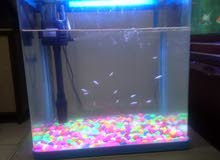 Small fish aquarium for sale