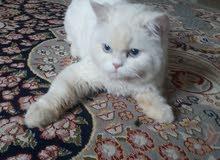 قطة لعوبه و جميله