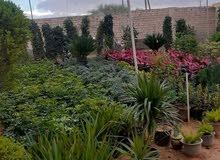 شركة اللينة الملكية لتنسيق الحدائق