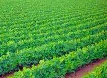 ارض زراعية للبيع