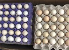 بيض اورقنيك انتاج اسبوعي طازج