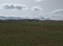 أرض فلاحية للبيع - ولاية باتنة