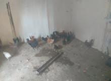 دجاج عربي ماشاءالله ايدحي العدد 22 و 2 فراريج