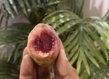 فاكهة الطيبين لوز بجري. المانجو للجنوب وقشطة ورمان