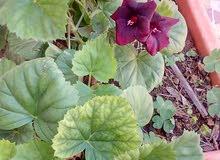 des plantes