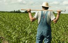 مطلوب للعمل فورا عمال زراعه بقريه فندقيه 5 نجوم