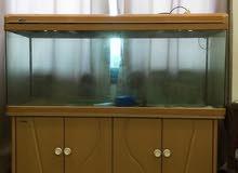 حوض سمك شبة الجديد مع الأغراض