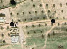 قطعة أرض سكنية  بي الجميل مساحتها 5700م  يوجد  بها عدد 20 زيتون
