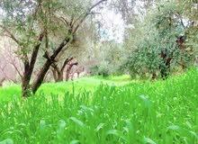 مزرعة للبيع في سوف 9 دونمات شجر مثمر و سعر خيالي