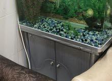 حوض اسماك