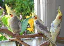 مطلوب طيور