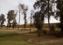 فيلا للبيع في المنصورية مصر مساحة 40 الف متر