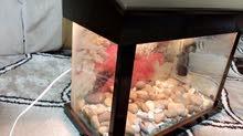 حوض سمك مع حجر وفلتر