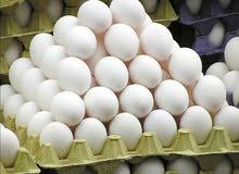 احتاج لكميات كبيره من البيض