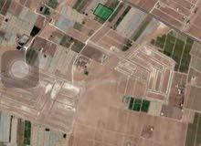 ارض للبيع بجانب الجواد العربي 5 دونم