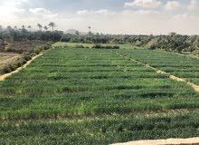 قطعة ارض زراعية للبيع بمدينة فايد - الاسماعيلية