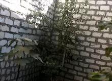 مزارع مصري محترم اشتغل حديقه منزل ازرع جميع الاشجار والورود والخضار 0781731287