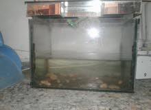حوض سمك صغير
