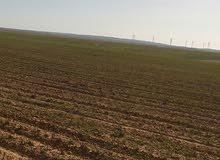 اراضي الشوبك الفجيج