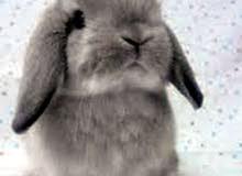 ارانب زينه