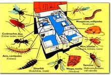 pest control & cleaning services home / flats