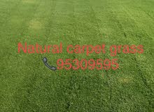 sale of natural carpet