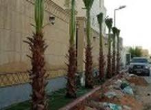 ابو علي التوريد والتركيب نخيل وتركيب الشبوك شبوك مزارع حكومية وملاعب وتوريد نخيل
