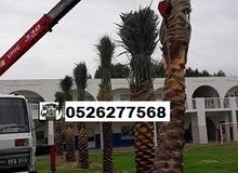 Date Palm Tree Sale 0526277568 with home delivery, Dubai - UAE