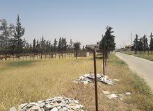 ارض مميزة للبيع ام العمد البركة بسعر 115 الف للدونم مقابل جامعة الاسراء