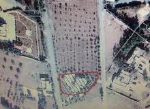 نمر اراضي تنظيم سكن ب  خلف جامعة الاسراء ب3كيلو من جهه الشمال مع تسهيلات بالدفع