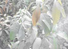 باحث عن عمل ادارة مزرعة فاكهة قريبة من اسكندرية