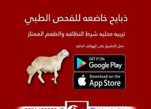 خروف تربيه في جده لاصحاب الكشتات
