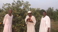 مزرعه ضخمة و حديثة للبيع قي بارا