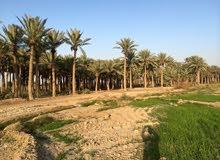 ارض (الارض طابو )زراعيه راقيه ولها طله على نهر الفرات تشرح النفس