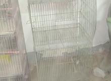 سلاكات عصافير للبيع